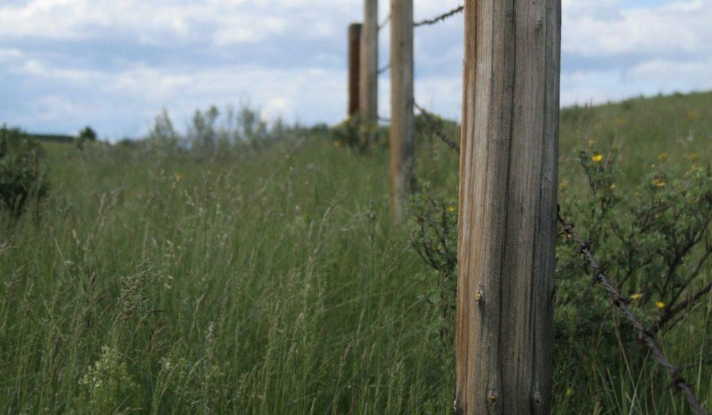 Fence Marking Property Line