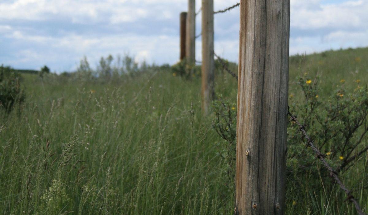 Fence-Marking-Property-Line