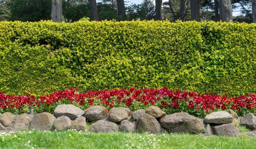 Flowerbeds Wall