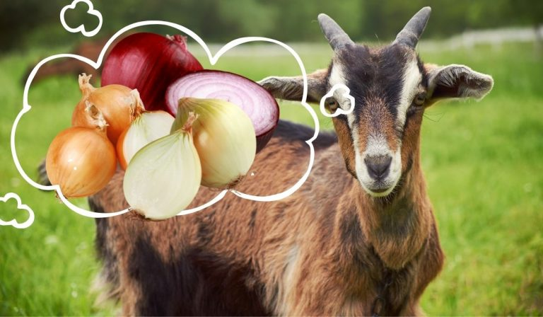 Can Goats Eat Onions?