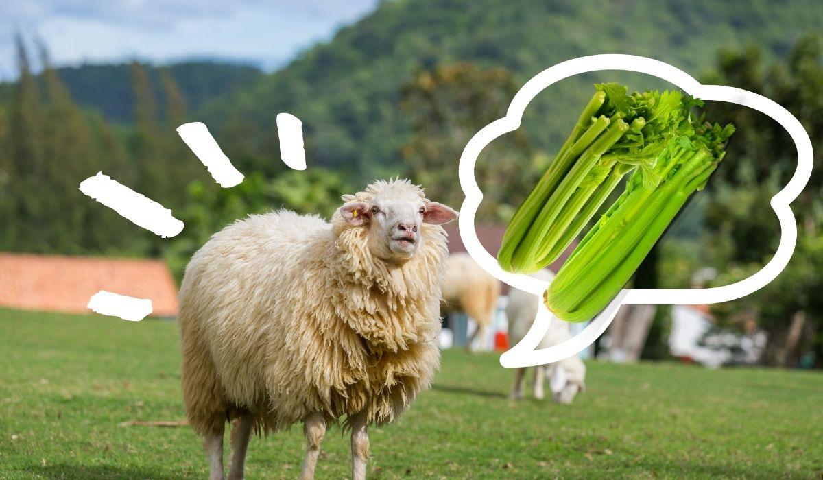 Sheep-and-Celery