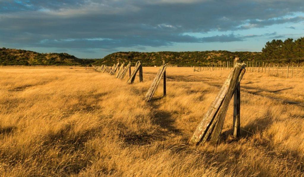 Wooden Posts Property Line