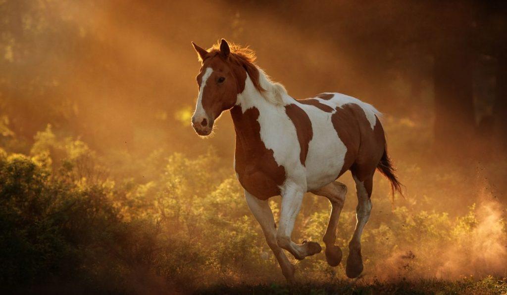 running American Paint Horse