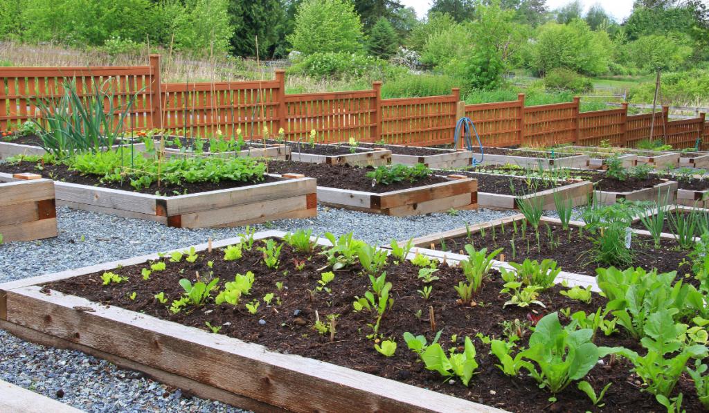 A vegetable raising bed garden at the backyard