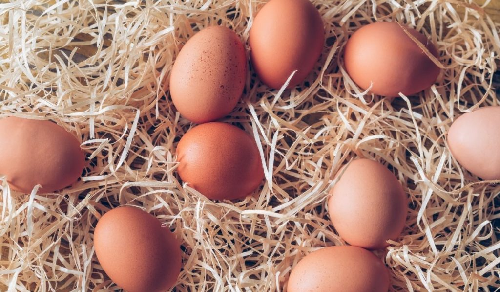 chicken eggs in hay