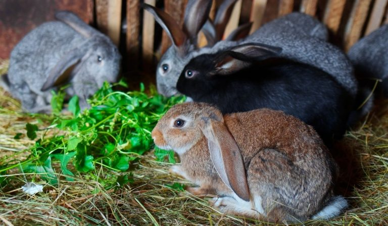 Ultimate Guide To Raising Rabbits For Meat