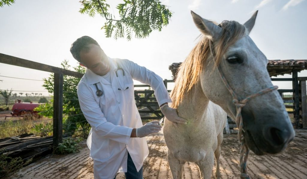 veterinarian gives a horse a vaccine shot